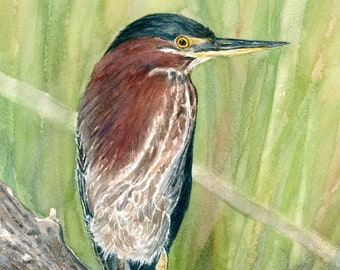 Green Heron Art Print - Watercolor Bird Illustration - Realistic Nature Art - Bird Painting - Gift for Birdwatcher - Cabin Decor