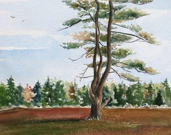 Original Watercolor Painting - Pine Tree, Blueberry Barrens - Matted Landscape Painting - Gift For Dad