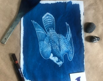 Peregrine Falcon Cyanotype