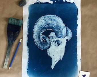 Corsican Ram Skull Cyanotype