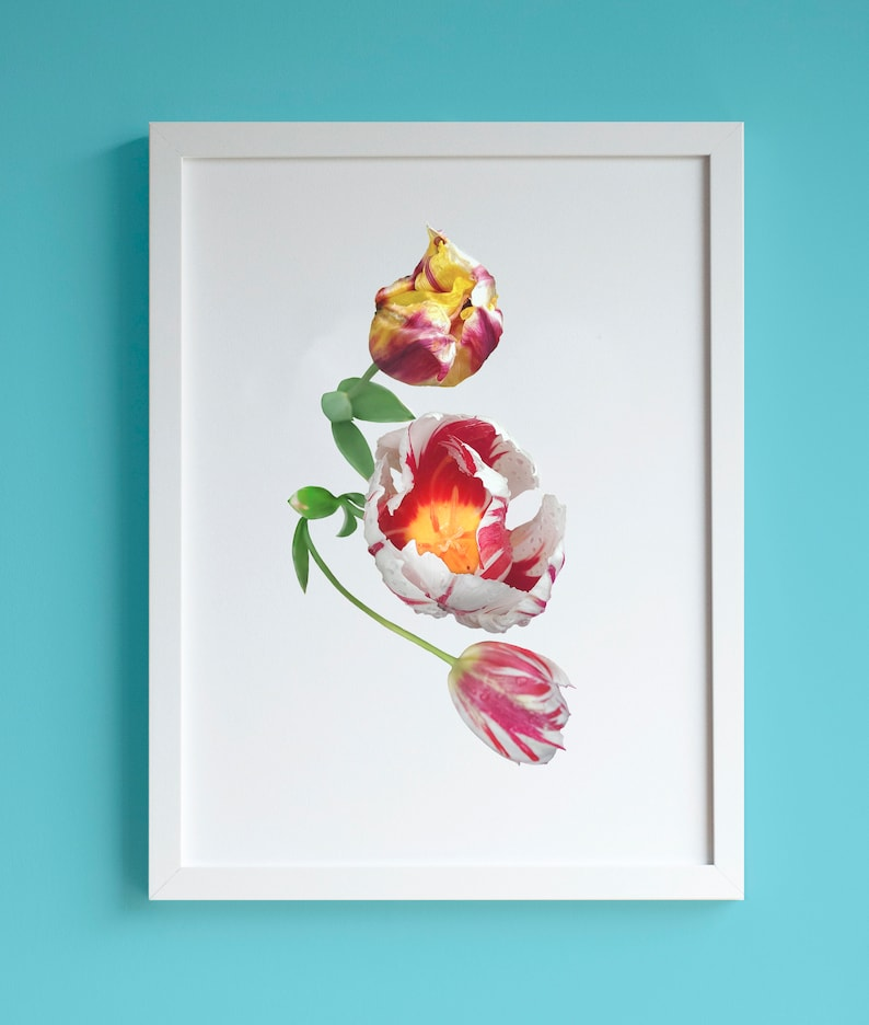 Red white and yellow tulips A4 print Spring flower botanical image 0
