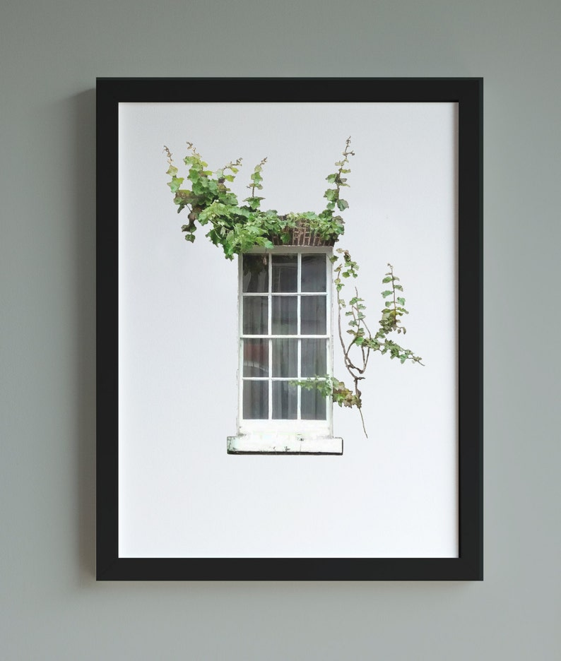Window with ivy A4 print architectural print nature photo image 0