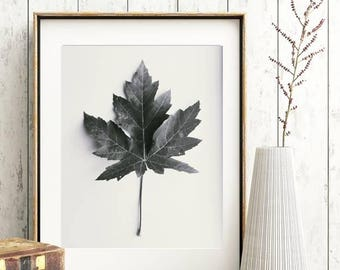 Botanical Print Farmhouse Style Wall Art Maple Leaf Photo Black and White Leaf Photography Digital Download Digital Background Image