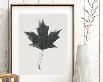 Black and White Nature Photo Simple Minimalist Art Maple Leaf Fall Decor Farmhouse Style Print Digital Download Image Printable Photo Art