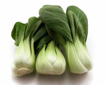 Pak Choi Canton White - 500 Seeds - Chinese Vegetable