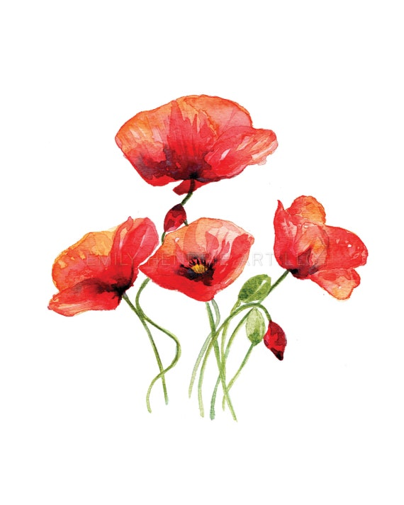Poppy Flower Watercolor Print Pressed Flower Art Vintage Etsy