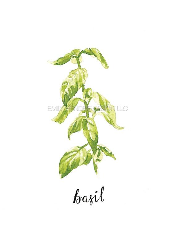 Flat Italian Parsley Herb Botanical Print Watercolor Art   Herb Art  Watercolor Italian Parsley  Plant Art  Kitchen Art  pressed herbs