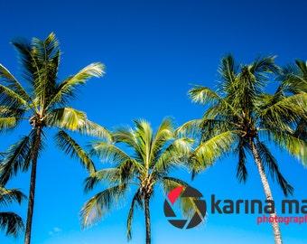 Beach Photograph, Palm Trees Print, Airlie Beach, Whitsundays, Wall Art, Home Decor, Travel, Landscape