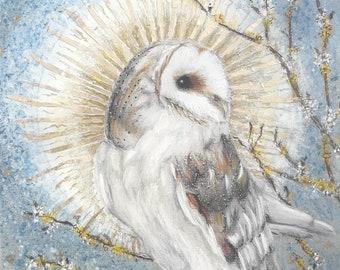 Christmas Greetings Cards - Barn Owl