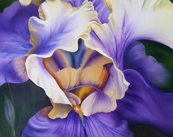 Iris, Flower, Spring, Purple, Realistic