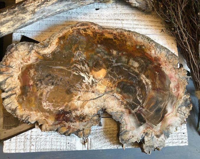 Petrified Wood Slab Fossilized Wood Tree Slab / Woodland Rustic Decor Petrified Wood Slice / Large Natural Polished Stone Decorator Piece