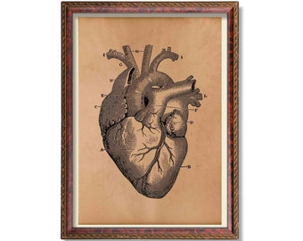 Heart anatomy print Antique medical poster Wall decor