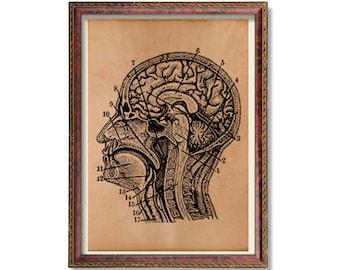 Vintage brain anatomy poster Head print Anatomical art