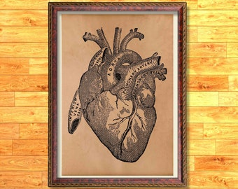 Heart poster Anatomy print Medical decor
