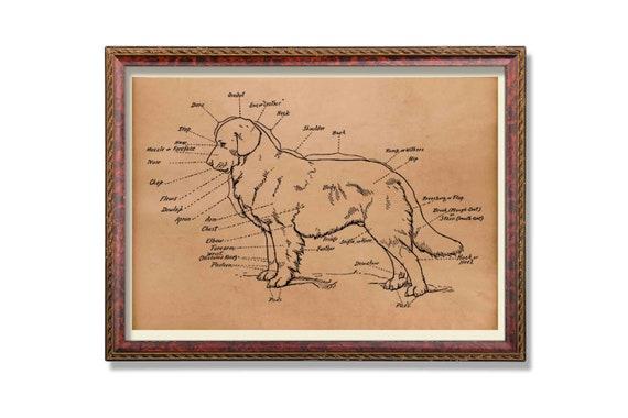 Anatomy Poster Animal Print Dog Scheme Decor Etsy