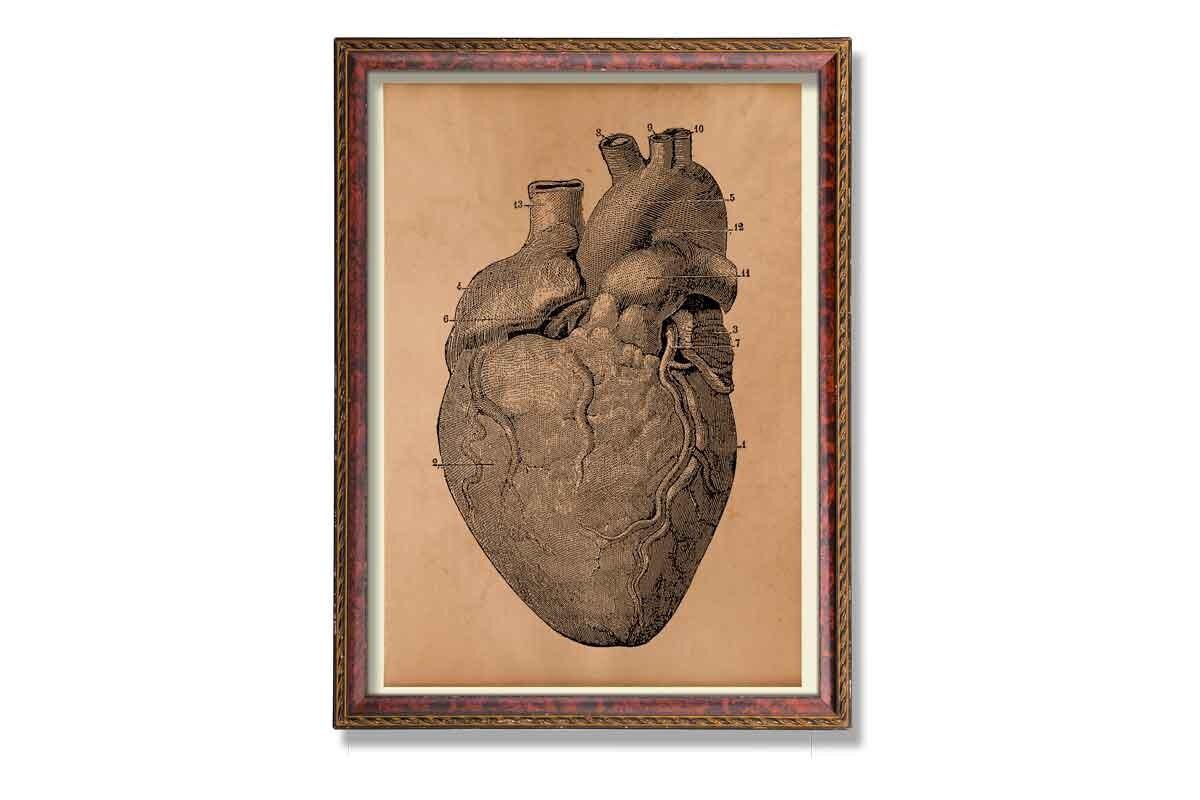 Alte Herz Illustration Kardiologie Druck Vintage Anatomie Poster