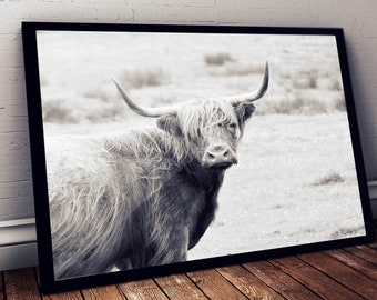 Highland Cow Print, Large Format Print,Highland Cow Photography Art, High Cow Printable Art, Highland Cow Photo Poster,
