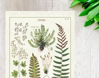 Ferns Kitchen Towel   Ferns Towel   Ferns Tea Towel   Floral Flour Sack Towel   Ferns Print    Botany Kitchen Towel   Botanical Tea Towel