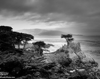 Lone Cypress Photo - Photograph of Lone Cypress in Monterey, California