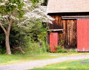 Spring Barn   Matted Print