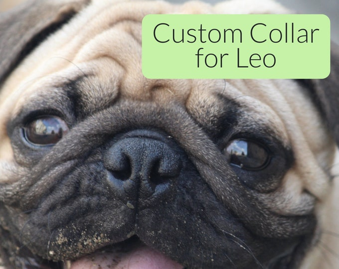 Custom Collar for Leo