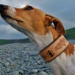 Hand Engraved Celtic Design Leather Whippet, Lurcher or Greygound Collar