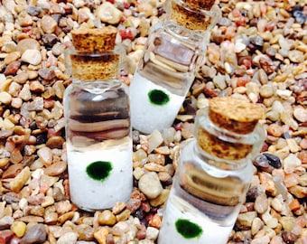 3X Marimo Moss Ball Vials Lucky Plants