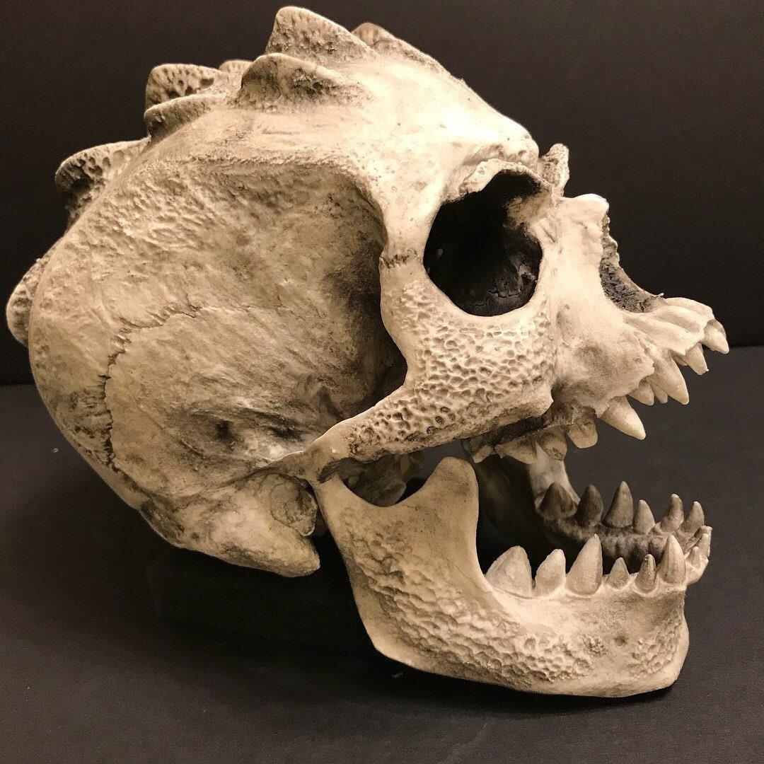 Guyot Designs 340043 Universal Splashguard Skull and Bones for sale online