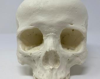 Human Skull Replica (squished)