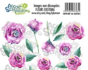 Fleurs Eustoma - Images à découper