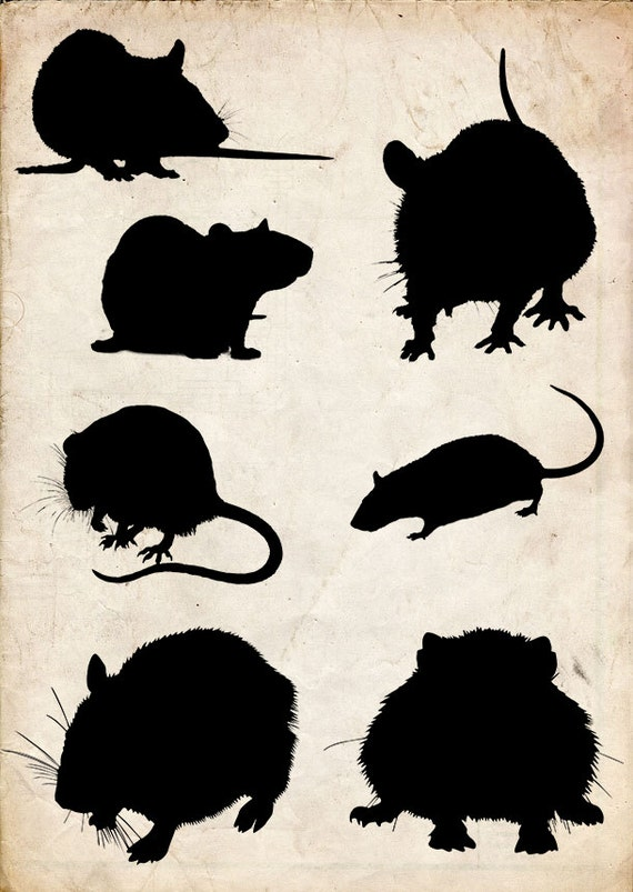 Like Or Share Maus M&228use Ratte Ratten Clipart Kostenlos - Transparent  Cartoon Rat - Free Transparent PNG Clipart Images Download