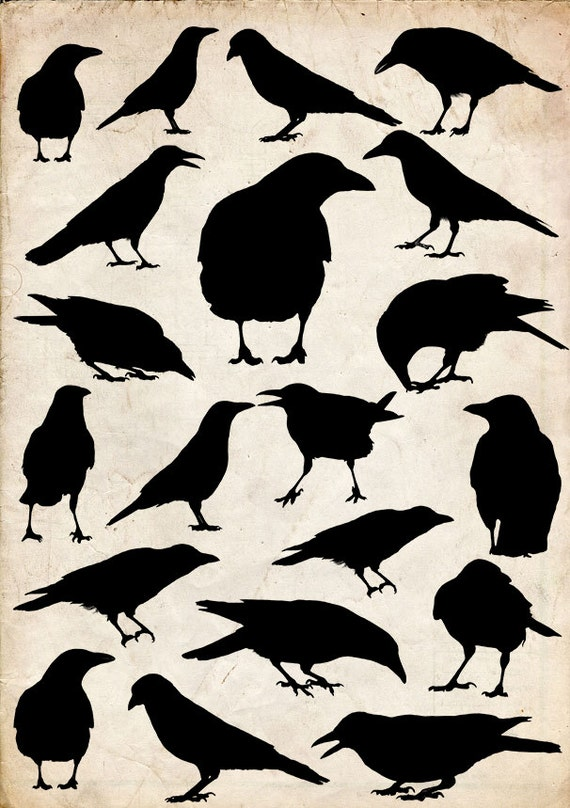 Crow Silhouette Set 5 20 Png Clipart Instant Download Etsy Crow silhouette from animals and birds. crow silhouette set 5 20 png clipart instant download clipart