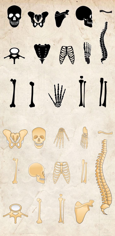 Huesos de clip art 29 huesos de cuerpo humano de alta   Etsy