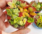 2.25 quot Mini Miniature Pot Ceramic Succulent Bonsai Cactus Planter Flowerpot Container
