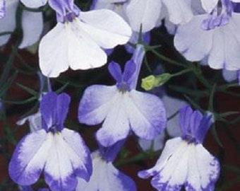 Multi Pelleted Lobelia Seeds Regatta Blue Splash Seeds Trailing Lobelia
