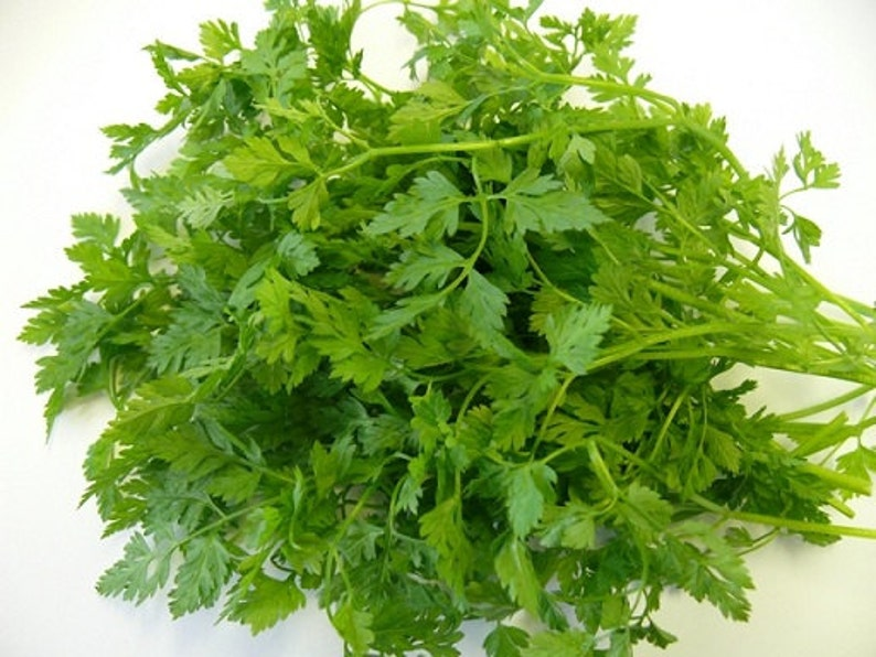 How When To Plant Chervil Seeds can Save You Time, Stress, and Money.