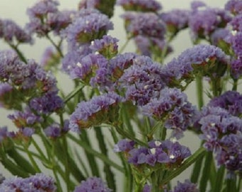 250 Seeds Statice Fortress Heavenly Blue Flower Seeds