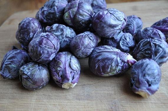 Purple Brussel Sprout Seeds F1 Hybrid Seeds 50 Thru 500 Seeds