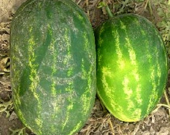 100 Seeds Watermelon CalSweet Melon Seeds Cal sweet