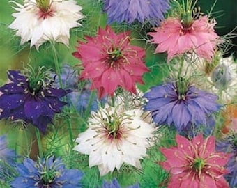 2,500 Seeds Persian Jewels Mix Nigella Seeds
