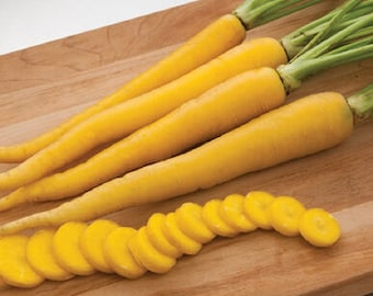 100 Pelleted Carrot Seeds Yellow Bunch F1 Hybrid