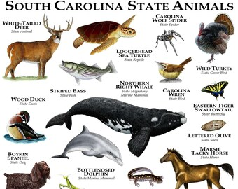 South Carolina State Animals