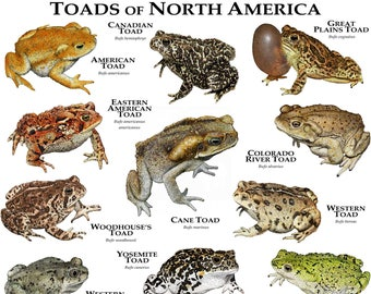 Toads of North America Poster Print