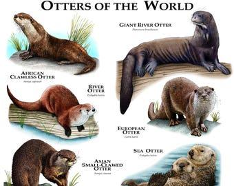 Giant otter   Etsy