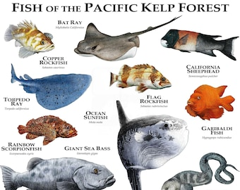 Marine Life of the Pacific Kelp Forest Poster Print