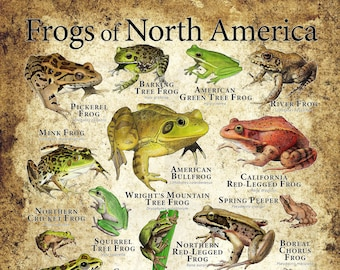 Frogs of North America Poster Print