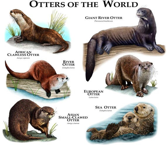 Otters of the World Poster Print