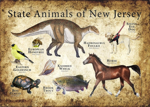 New Jersey State Animals Poster Print Etsy
