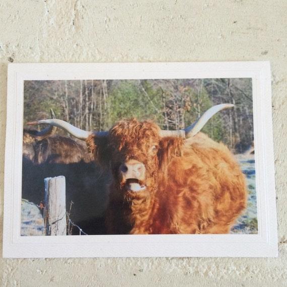 Funny Cow Birthday Card Greeting Card Custom Card Farm Etsy