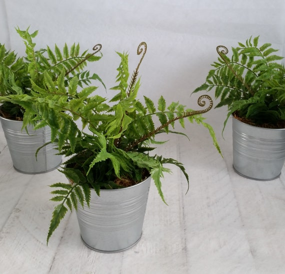 Fern Plants In Galvanised Pots Artificial Green Houseplant Etsy
